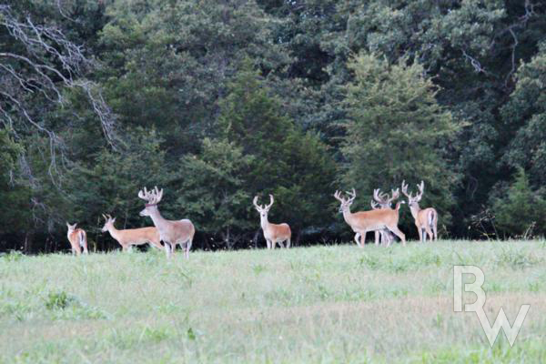 Guided Whitetail Deer Hunts In Oklahoma - Riverview Ranch